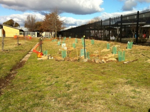 Some of the recently planted trees.